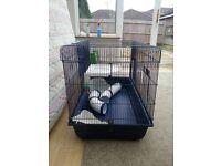 Cage Rat/ferrets/rabbits/guinea pigs