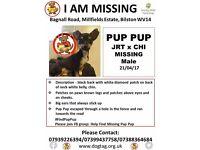 missing jack chi