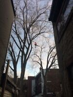 Emondage elagage taille branche arbre tree pruning