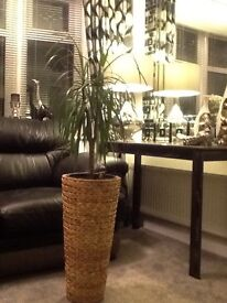 Tall woven plant stand
