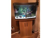64L fish tank with stand and extras