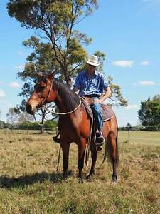 QH gelding Rochedale Brisbane South East Preview