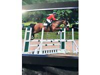 16hh Horse