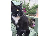 Missing cat Floki