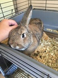 for sale 8 month old female rabbit comes with her set up