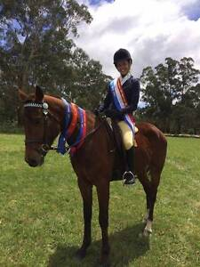 Stunning 4yo Quarter Horse X by Carlingford Patrons Pass Beaconsfield Cardinia Area Preview