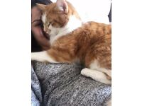 two beautiful 2 year old cats looking for loving home