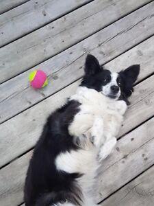 Expirenced Professional Dog Lover (Pet Sitter) St.Albert