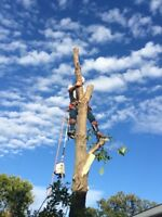 Tree trimming, tree removal, tree pruning, tree care