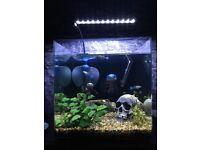 60ltr Fish Tank