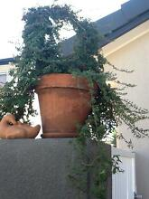 Terracotta pot with circle topiary and duck Clear Island Waters Gold Coast City Preview
