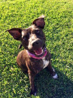 Happy Paws Dog Walking Molendinar Gold Coast City Preview