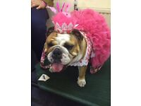 Beautiful dresses and hats for Bulldogs