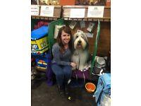 Stacey's Pet Care- dog walker / pet sitter in East Bristol