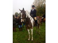 Capable Rider/Groom for dealing yard in the Cotswolds.