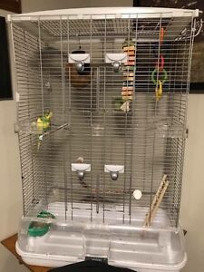 Vision Medium (TALL) cage! New over 200 local, $65 OBO