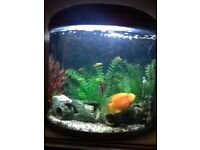 Established tropical aquarium with fish 110 litre with many accessories