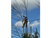 Qualified Tree Surgeon Subcontractor