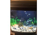 Fish tank / stand and acces