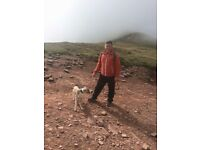 Valley dog walking and pet sitting