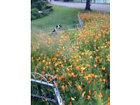 All Dogs Are Special - One on One dog walking with kind Dog Walker- Accepting new doggys
