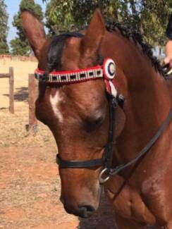 OUTBACK HORSE TRADERS (SA)