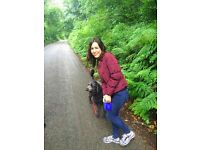 Dogs & Cats boarding/dog walking in Camden and surrounding area