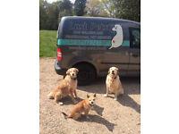 LUSH PETS dog walking & pet visits