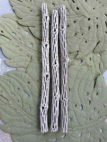 "PRETTY Cholla Wood ""3"" Pieces 12 "" to 14"""