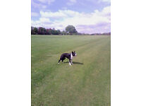 DOG WALKING- DOG BOARDING- CHAPEL ALLERTON LEEDS LS7