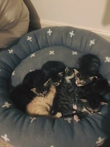 Beautiful kittens Anna Bay Port Stephens Area Preview