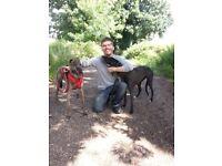 Lawrences dog walking services
