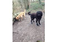 STACEY'S PET CARE- dog walker/pet sitter east and south Bristol and surrounding area
