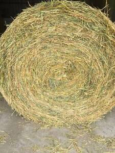 Oaten HAY 5ft Rounds Shedded Burton Salisbury Area Preview