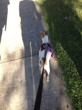 Paws And Tails Dog Walking Service Winmalee Blue Mountains Preview