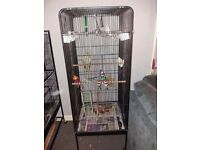 2 budgies and a cockatiel with large cage £120 or very nearest offer