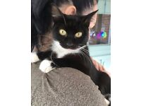 young black and white female cat