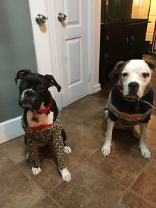 Family of five looking for a dog friendly home