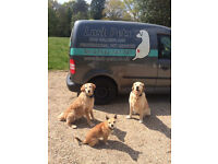 LUSH PETS dog walking SMALL GROUPS and pet services
