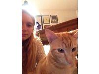 Passionate cat sitter