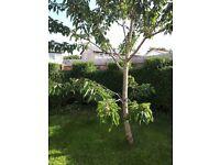 Hedge master gardening landscape services