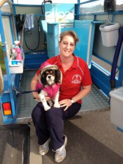 Little pooches dog grooming service carrum downs grooming aussie pooch mobile dog grooming pakenham surroundings solutioingenieria Images