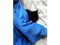 Free to good home female black 2 year old cat