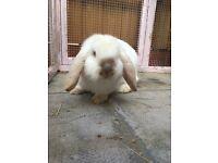 Baby boy rabbits