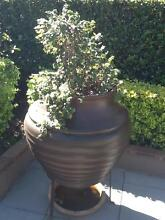 Large tear-shaped brown pot and topiary Clear Island Waters Gold Coast City Preview