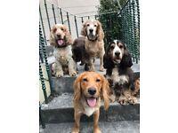 Pawsitively Pet Services Kirkcaldy. Pet sitting, pet visits, dog walking, horse care