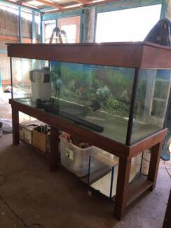 Large 6ft Tank with Filter