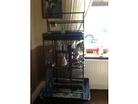 Large bird cage and many extras