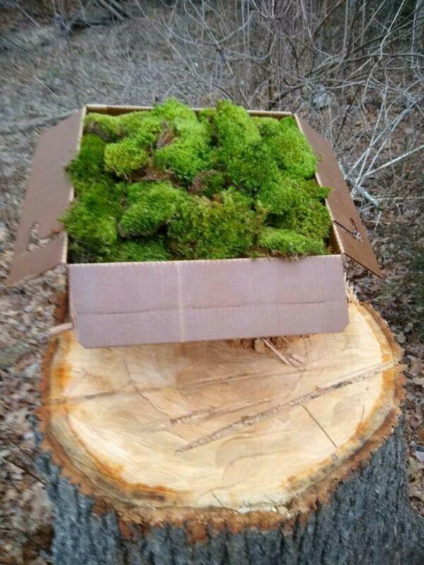 Dry Mood Moss, 100% natural, great for floral arrangements! 10.00 per lb.