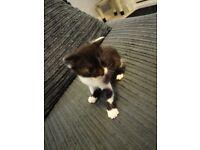 2 Kittens For Sale